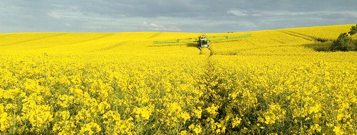 Blunk Agrar: Pflanzenschutz