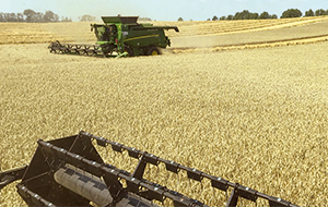 Blunk Getreide Ernte effektiv auch in engen Zeitfenstern