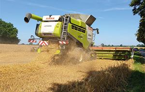 Blunk Getreide Ernte