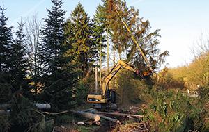 Blunk Forstarbeiten: Tannen fällen - Fläche roden