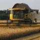 Blunk bei der Getreideernte in Mecklenburg