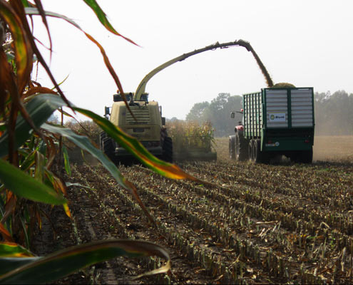 Blunk Übermenge Maisanbau - 1