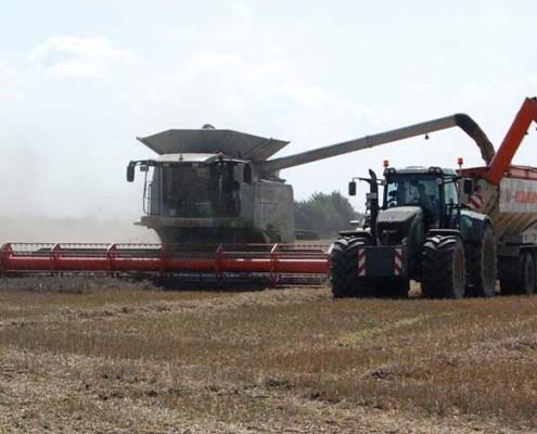 Blunk bei der Getreideernte