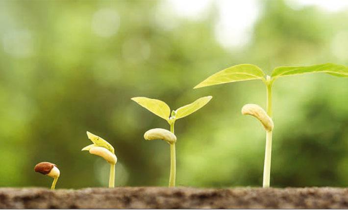 Kräftigere Pflanzen mit Klärschlamm-Düngung