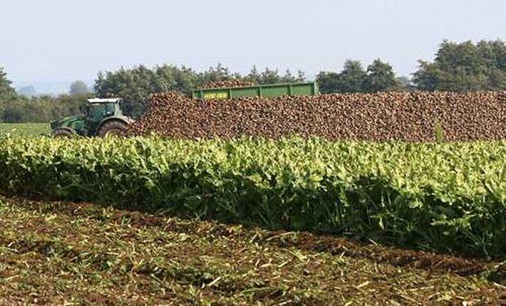 Rübenernte 2017 - Bild vom Start der Ernte
