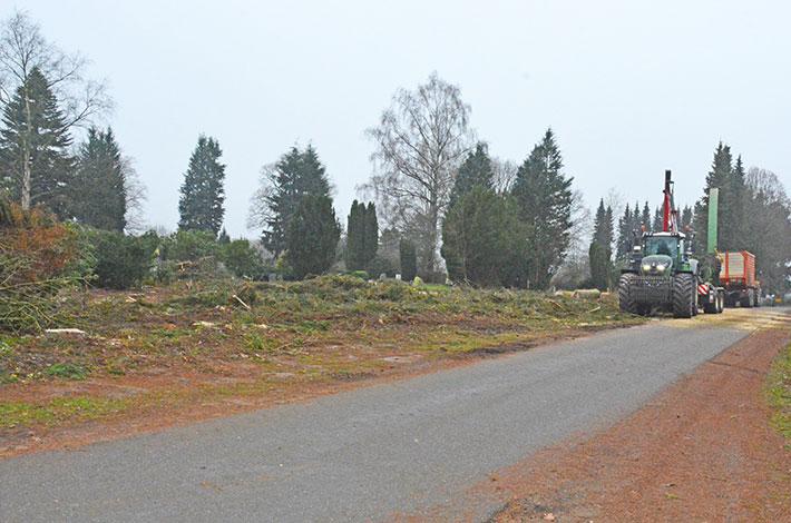 Blunk Baumfällungen Friedhof
