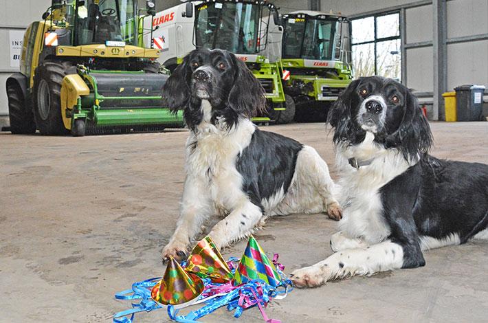 Blunk Bürohunde feiern Silvester
