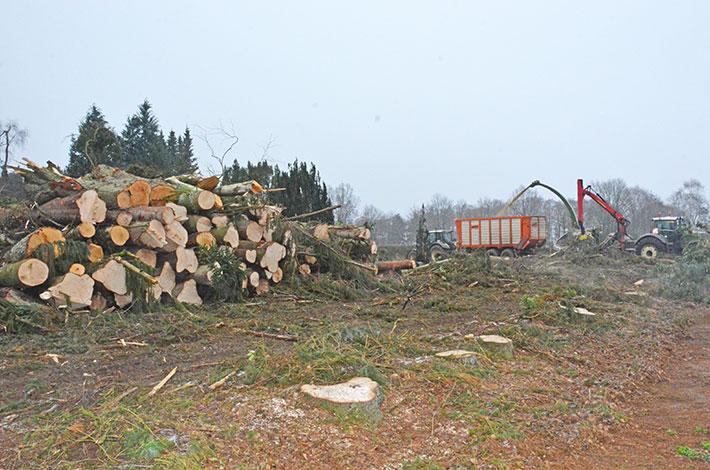 Blunk Holz zu Hackschnitzeln verarbeiten