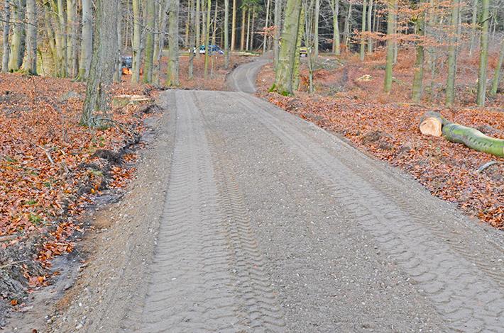 Blunk Wegebau Forstarbeiten Wald