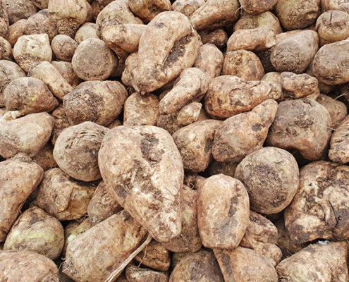 Blunk Kraftfutter Mais Rübe Originalzustand Rüben