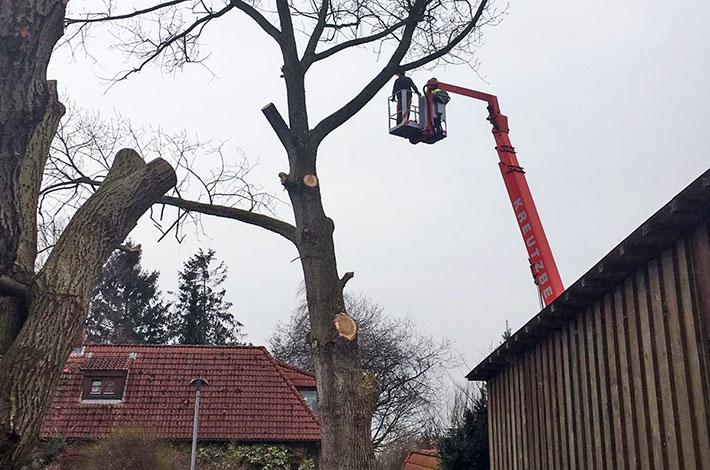 Blunk bei Spezial-Fällung: mit mit Hubsteiger im Baum