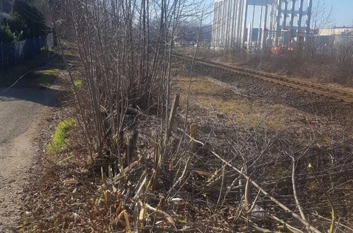 Blunkmulcht Böschung an der Bahnlinie 04