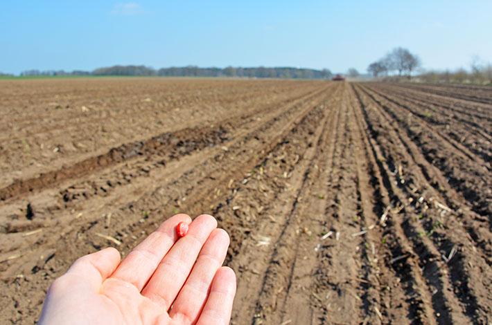 Blunk Rendswühren: Mais drillen