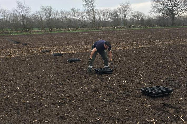 Blunk Düngeschalen auf Weizenfeld aufstellen