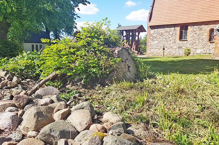 Blunk Rubinien Stubben entfernen umgestürzter Baum