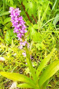 Blunk errichtet Weidezaun für Orchideen in Wedeler Au