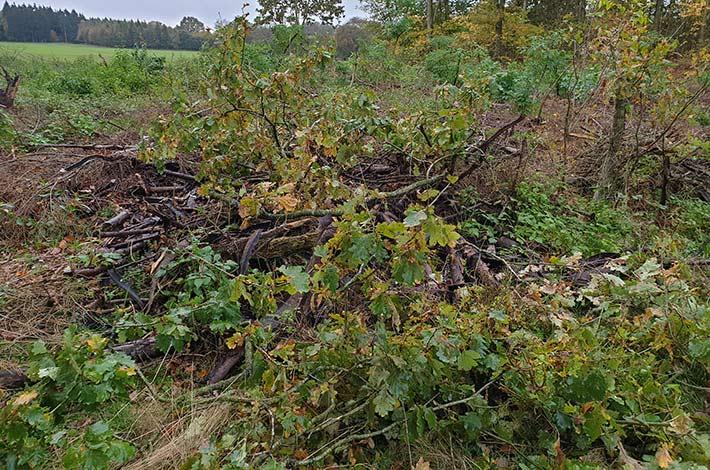 Blunk Testeinsatz im Forst mit Bobcat Raupe und Forstmulcher - das Gelände vorher 2