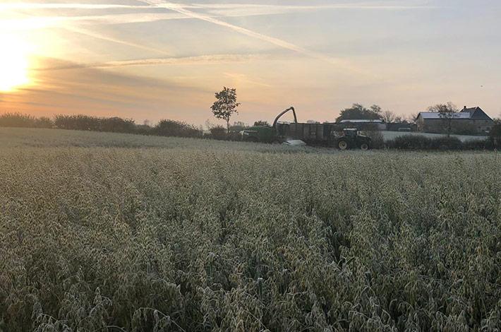 Blunk bei späten Herbst- und Winterarbeiten: Holtsee Hafer-GPS 1