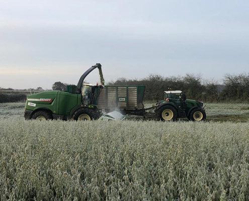 Blunk bei späten Herbst- und Winterarbeiten: Holtsee Hafer-GPS 2