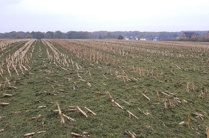 Blunk bei späten Herbst- und Winterarbeiten: Holtsee fünfter Schnitt 3