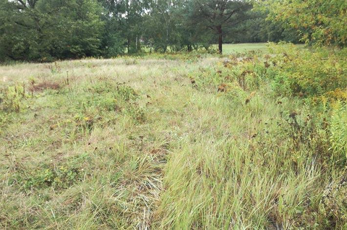Blunk baut Natur-Golfanlage - mulchen nur der benötigten Flächen
