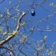 Frohe Ostern wünscht Blunk bei bestem Frühlingswetter