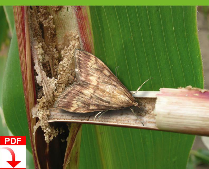 Download Blunk Dienstleistung Agrar: Mechanische Maßnahmen gegen Maiszünzler
