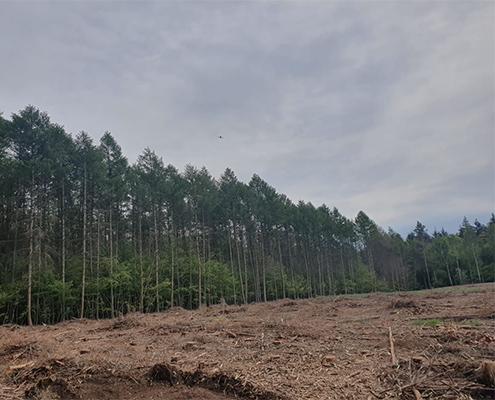 Blunk mulcht Forst gegen den Borkenkäfer 01