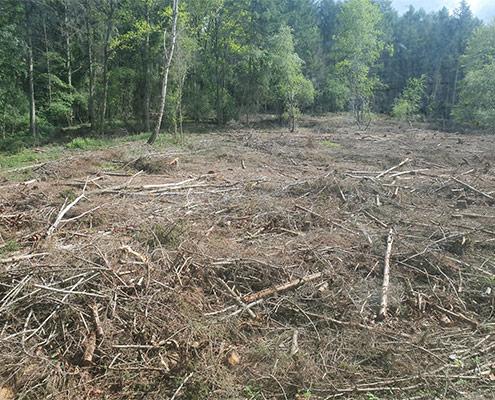 Blunk mulcht Forst gegen den Borkenkäfer 02
