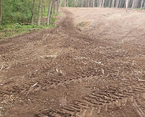 Blunk mulcht Forst gegen den Borkenkäfer 07