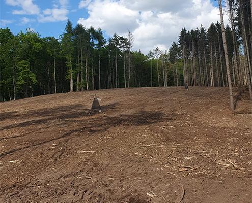 Blunk mulcht Forst gegen den Borkenkäfer 08