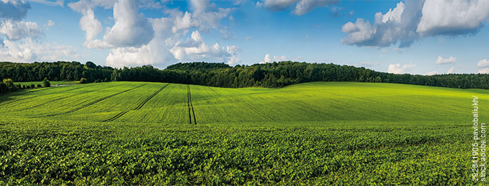 Grünes Feld unter blauem Himmel im Norden - Adobe Stock Photo