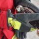 Blunk im Einsatz: Rettung Jungfalke in Biogasanlage Honigsee