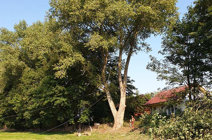 Blunk: Baum fällen - Spezialfällung 03