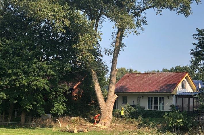 Blunk: Baum fällen - Spezialfällung 05