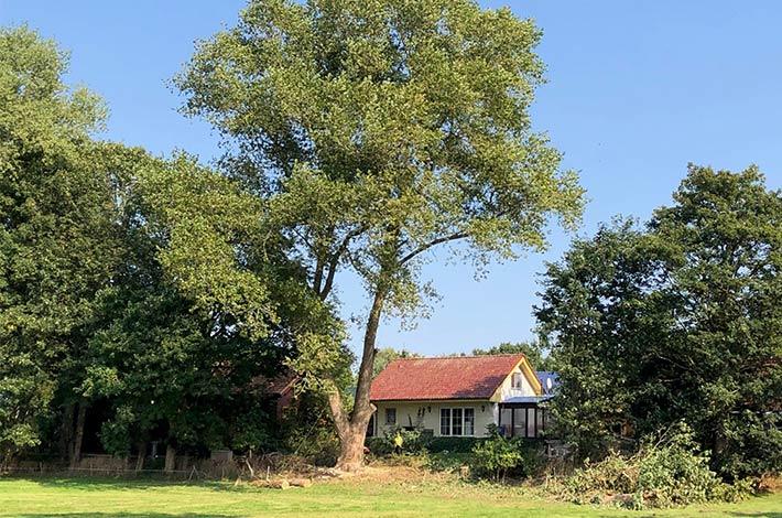 Blunk: Baum fällen - Spezialfällung 06