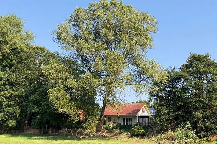 Blunk: Baum fällen - Spezialfällung 07