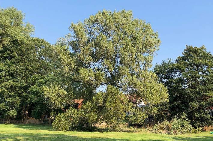 Blunk: Baum fällen - Spezialfällung 08