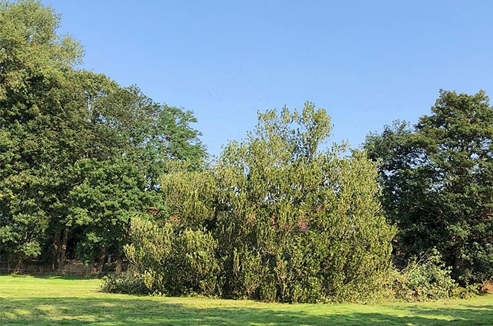 Blunk: Baum fällen - Spezialfällung 09