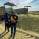 Dmax Filmteam filmt Blunk-Team bei der Mais Ernte 18