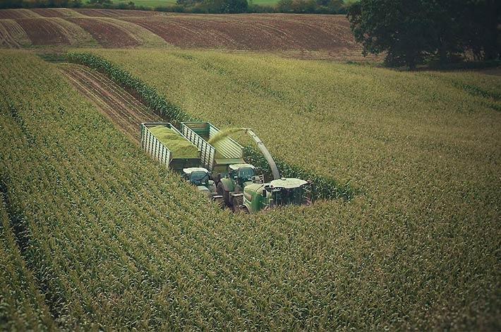 Blunk im Film beim Mais häeckseln in Honigsee - 03