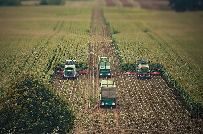 Blunk im Film beim Mais häeckseln in Honigsee - 04