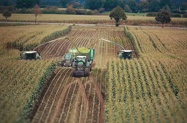 Blunk im Film beim Mais häeckseln in Honigsee - 07