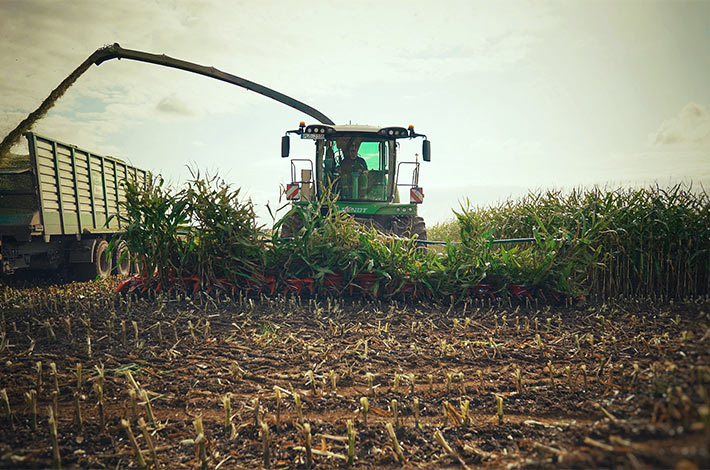 Blunk im Film beim Mais häeckseln in Honigsee - 12