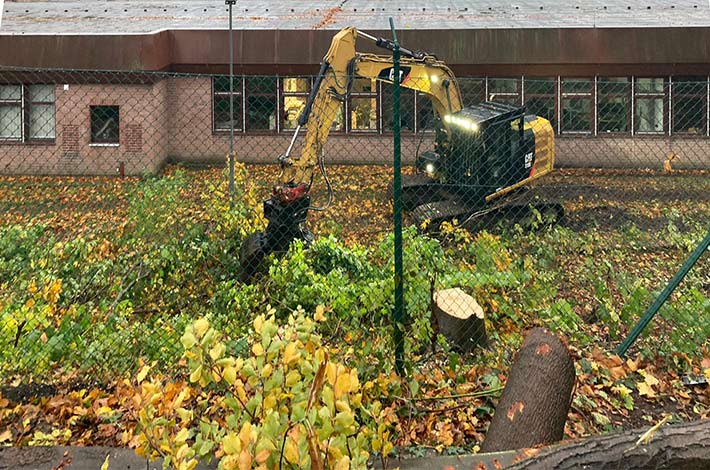 Blunk Umwelt Forst Baufeld Räumung Bäume fällen 02