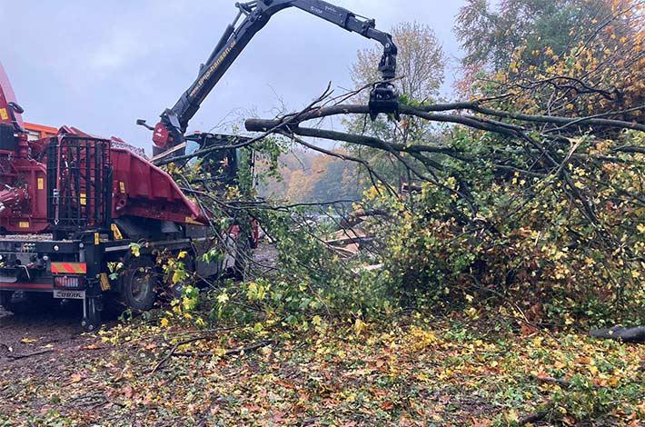 Blunk Umwelt Forst Baufeld Räumung Bäume fällen 06