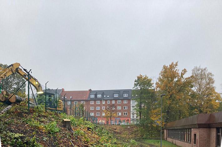 Blunk Umwelt Forst Baufeld Räumung Bäume fällen 07