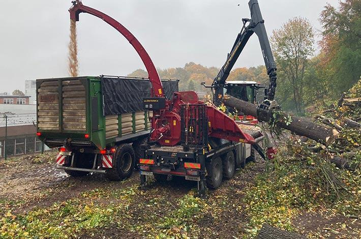 Blu Uumwelt Forst Baufeld Vorbereitung Räumung Bäume fällen 18