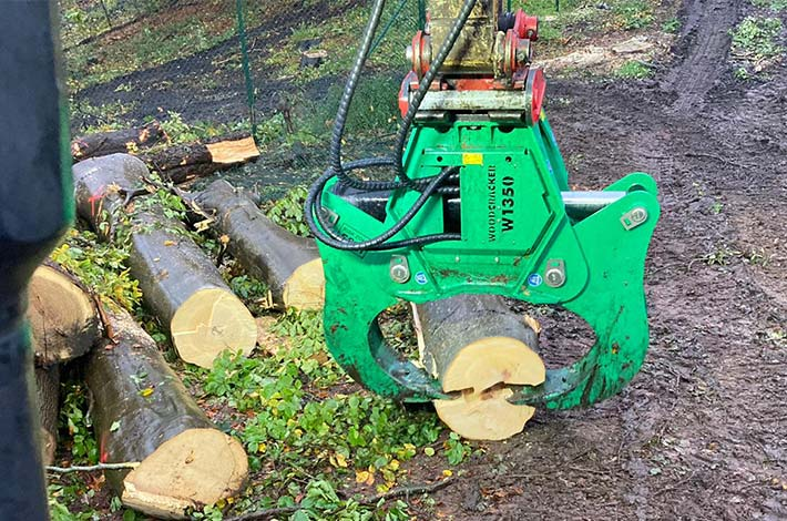 Blunk Umwelt Forst Baufeld Räumung Bäume fällen 19