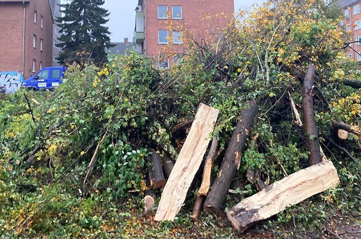 Blunk Umwelt Forst Baufeld Räumung Bäume fällen 21